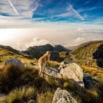 Dog-Friendly UK Summer Holiday Ideas