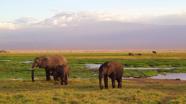Tanzania – A Brief Travel Guide